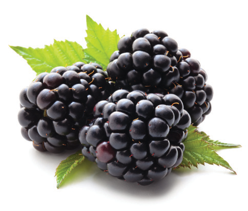 blackberry bridal punch